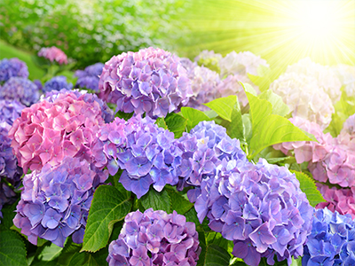Flowers blooming in sunshine